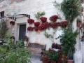 fiori-ai-muri