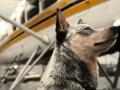 in aereo