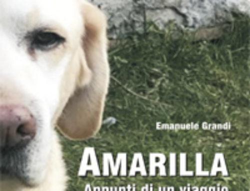 Amarilla e il suo viaggio